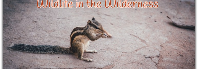 Let us think about the Sick Wildlife in the Wilderness