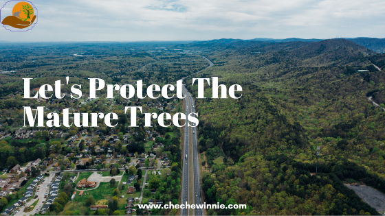 Let's Protect The Mature Trees