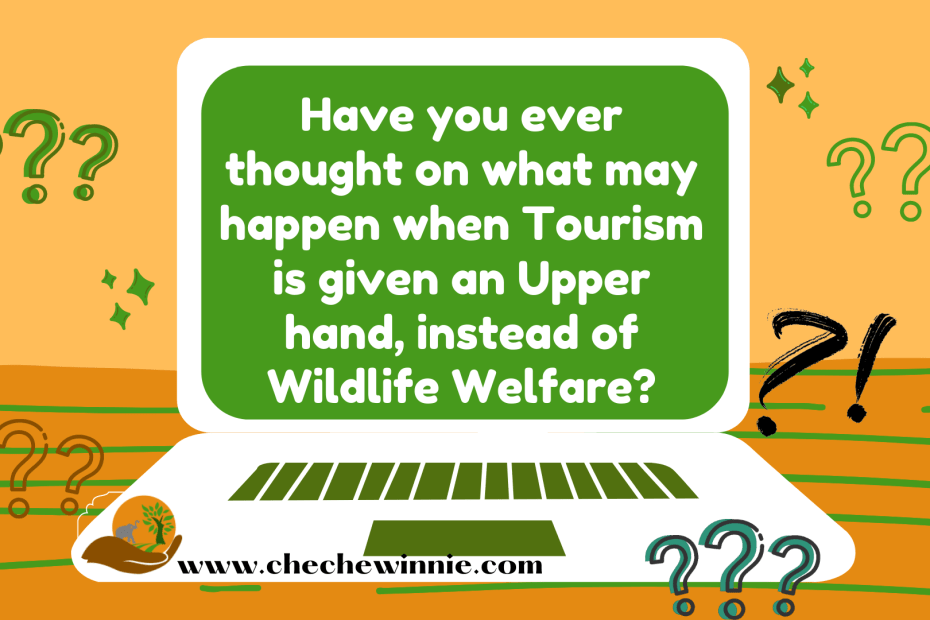 Have you ever thought on what may happen when Tourism is given an Upper hand, instead of Wildlife Welfare?