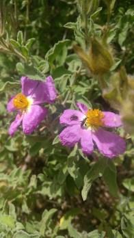 חורשת ה-40 פרחים 1