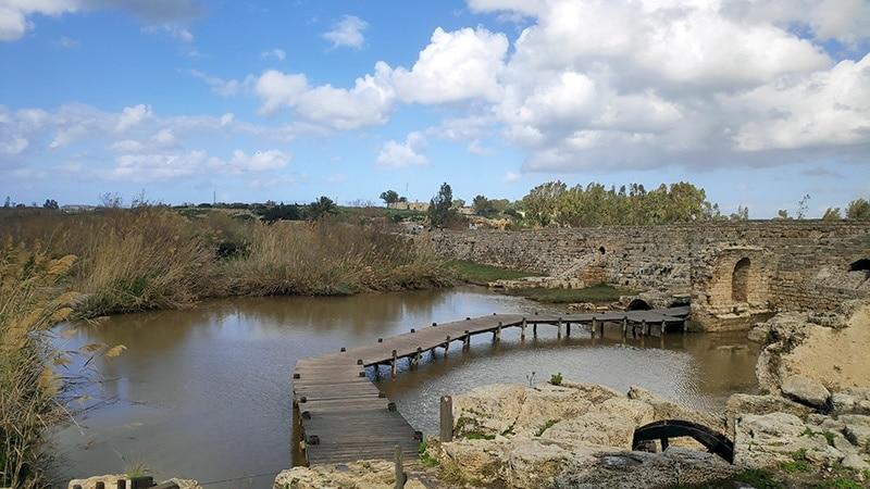 נחל תנינים גשר עץ