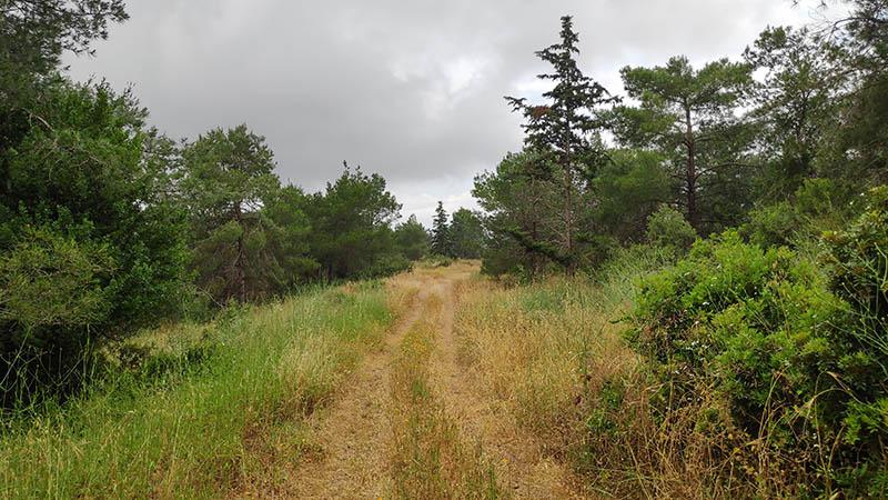 השביל הכחול ביער עופר