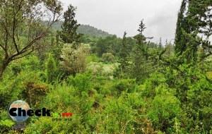 מסלול טיול קצר ביער עופר