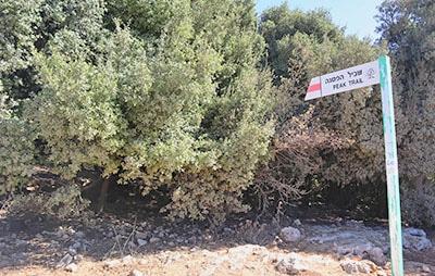 שלט תחילת שביל הפסגה של הר מירון