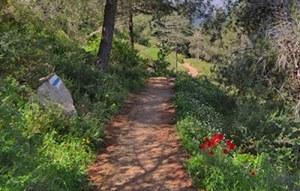 שביל הארז ביער ירושלים