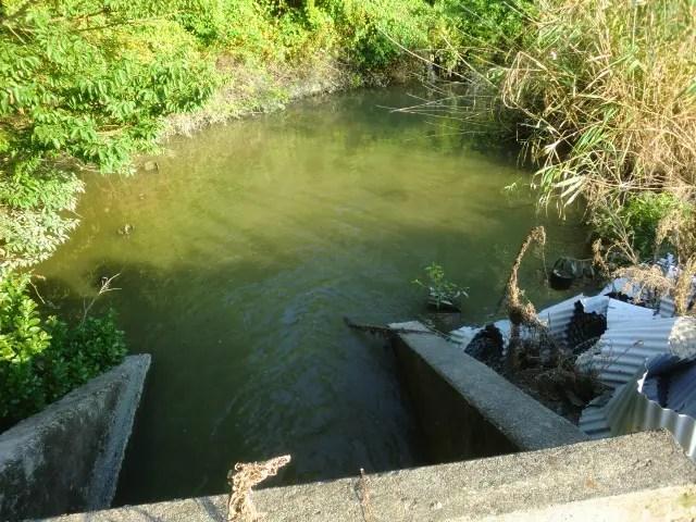 オオアタマクサガメや日本産クサガメが生息している沼地