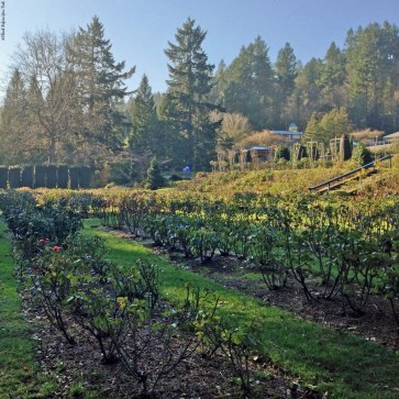 International Rose Test Garden in winter - Portland, Oregon