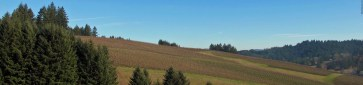 View from the tasting center at WillaKenzie Estate - Yamhill, Oregon
