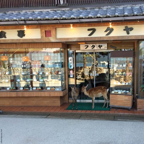 Deer outside a storefront on Miyajima Island - Itsukushima, Japan