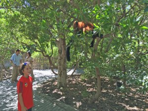 One of the best activities in Valencia for kids is the Bioparc