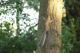Squirell climbing a tree