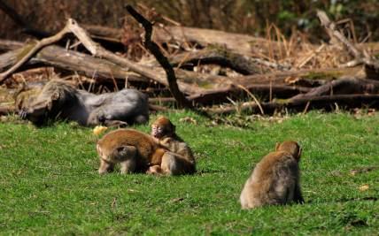 Monkey Forest, Trentham