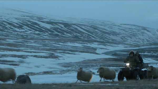 【影評】《羊男的冰島冒險》冰島人情的冰封與冰釋 - 雀雀看電影
