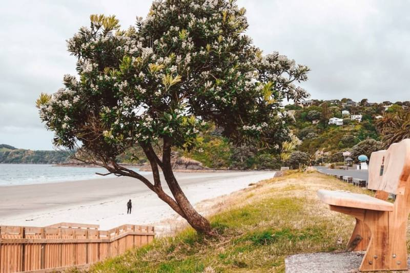 Waiheke Island - New Zealand Honeymoon