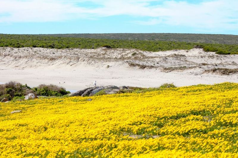 Things To Do In West Coast National Park