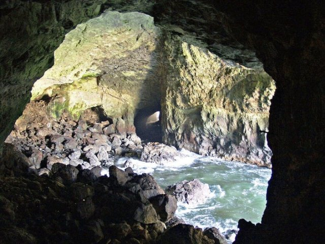 Sea Lions Cave - Things To Do In Florence, Oregon
