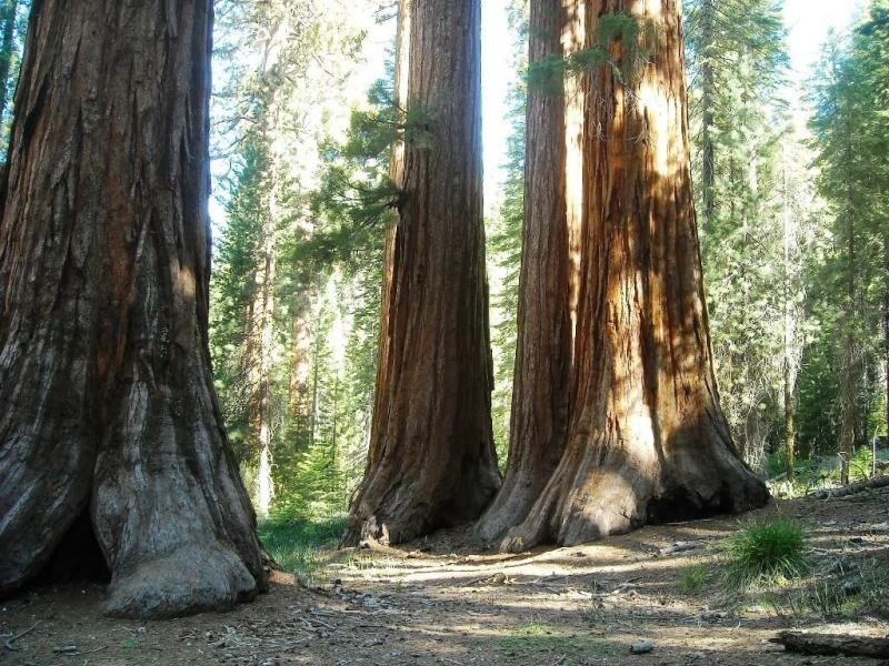 Sequoia, Three Rivers - Beautiful Small Towns In California