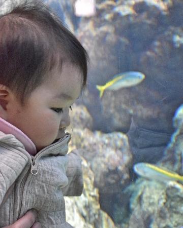 aquarium032401