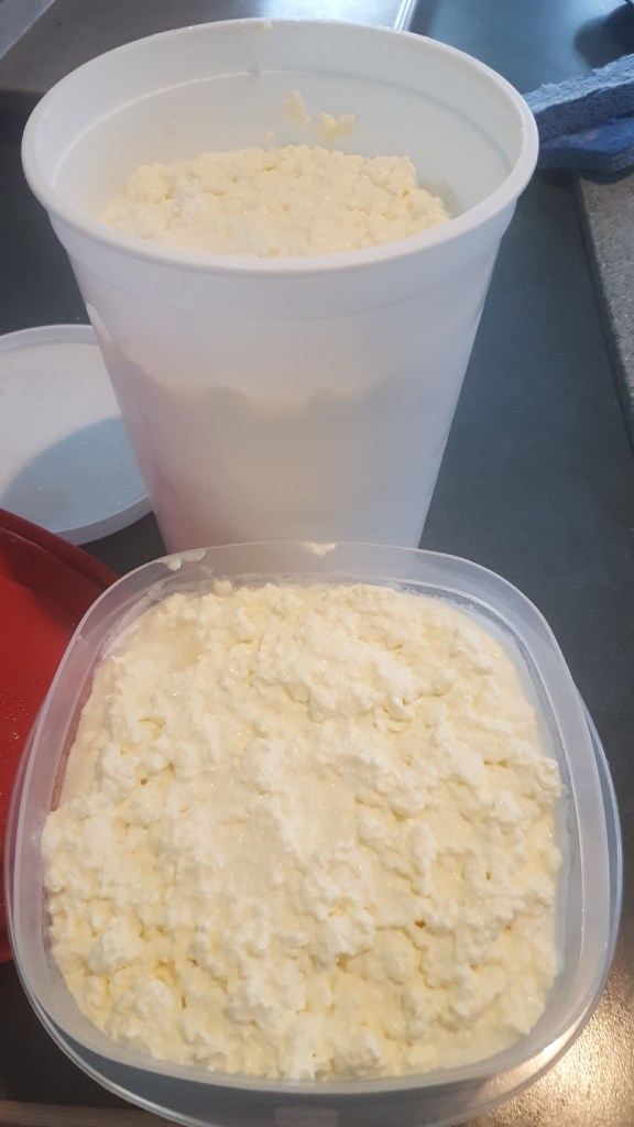 The finished cottage cheese