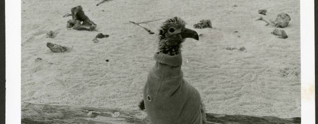 big baby bird in a sweater on a beach