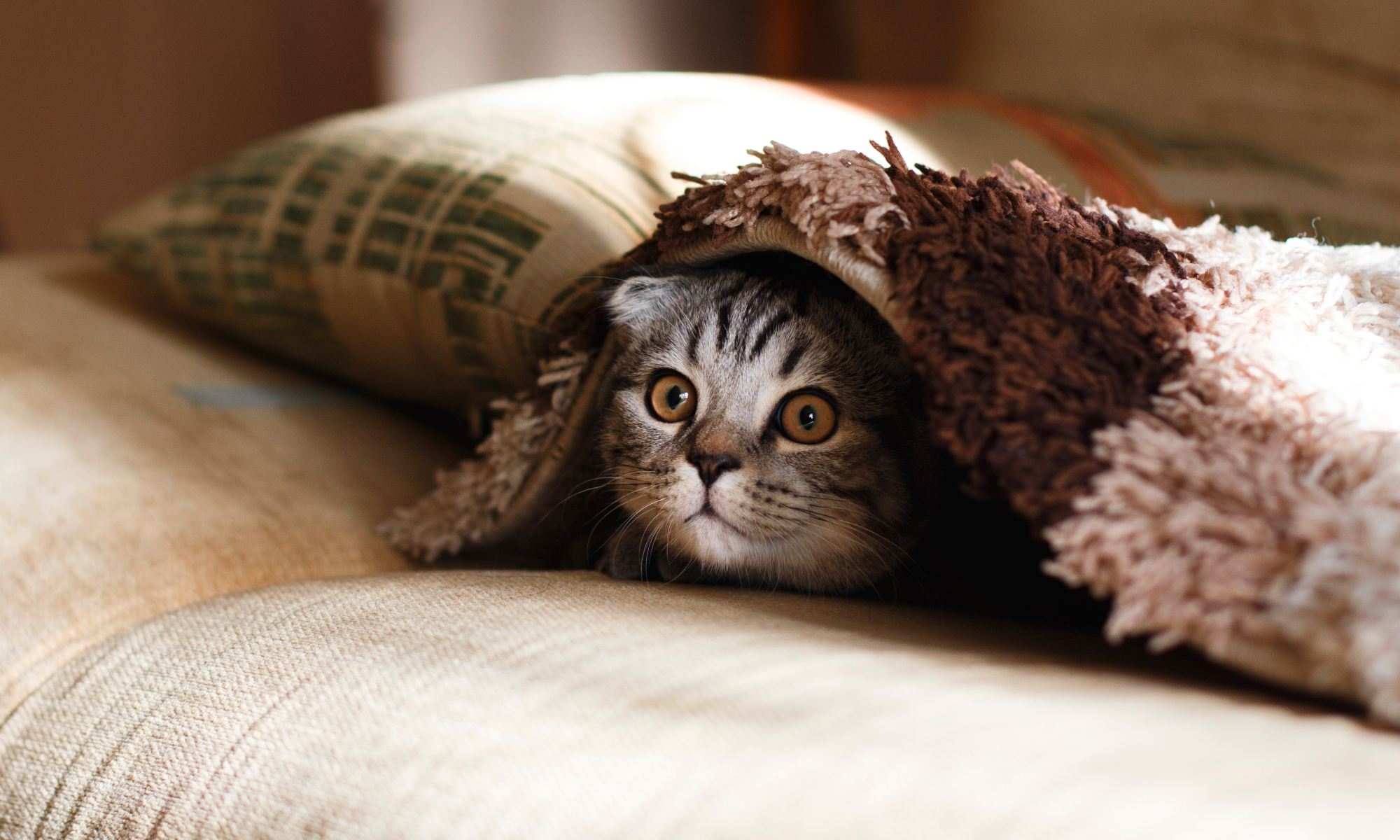 cat emerging from blanket by mikhail vasilyev