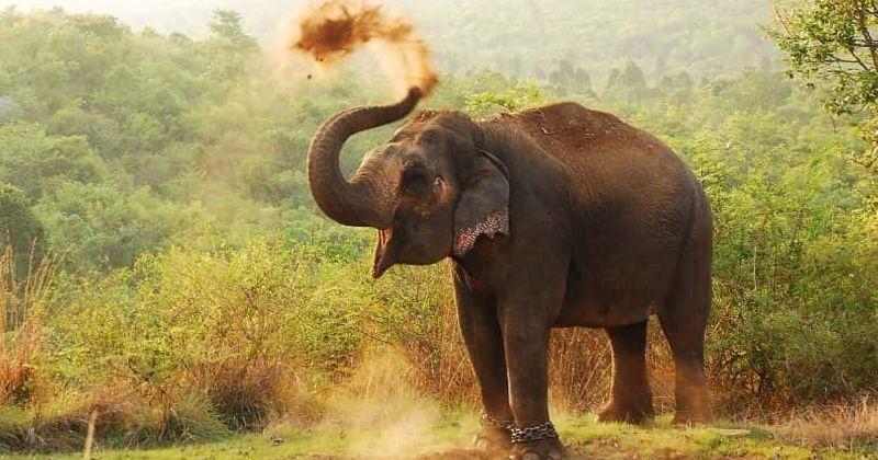 Decodificando la torturada vida de los elefantes asiáticos: la directora Ashley Bell comparte su experiencia mientras filmaba su documental