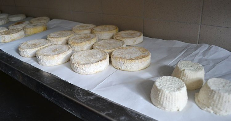 Cheese maturation