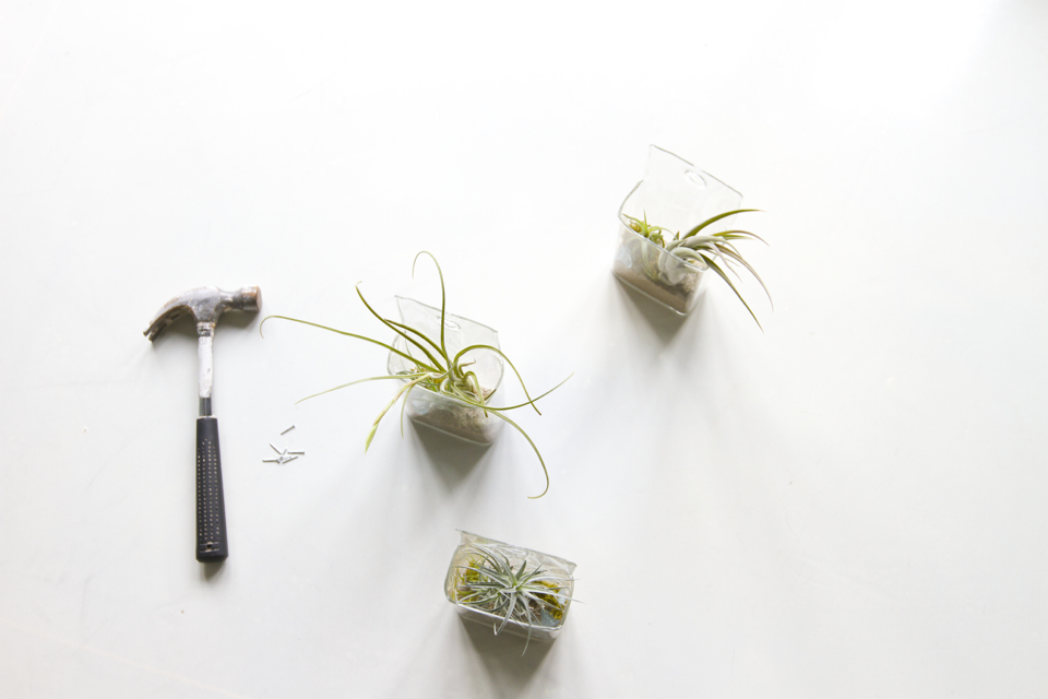DIY Hanging Air Plants  Succulence Plant Store in San Francisco  Cheetah is the New Black