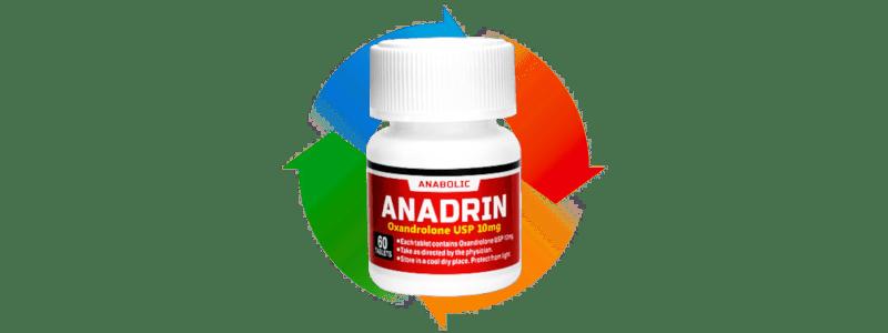 アナドリン の筋肉に効果的なサイクル方法まとめ