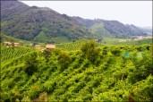 Prosecco - Le colline del Prosecco