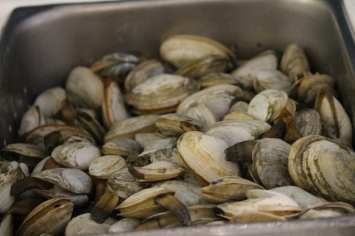 Local steamer clams