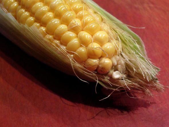 corn11