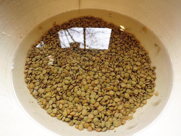 regular lentils