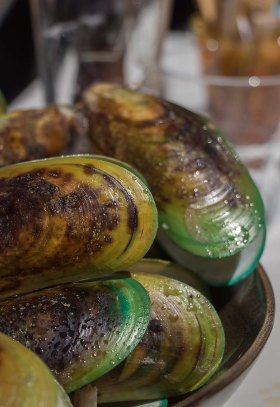 Green-Lipped New Zealand Mussels