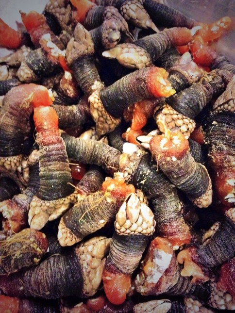 I ate gooseneck barnacles for the first time this year. Simply boiled in salted water, it was an amazing start to a delicious evening of food and wine with friends at home.