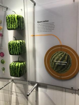 global-kitchen-melon