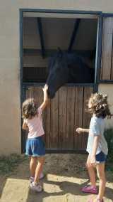 caballos en manso riera