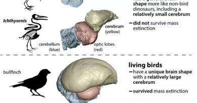 Ученые объяснили, как птицы пережили вымерших динозавров