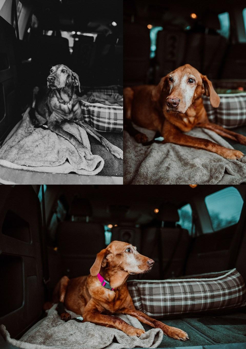 Chelsea Kyaw Photo - Des Moines Iowa Pet Photographer