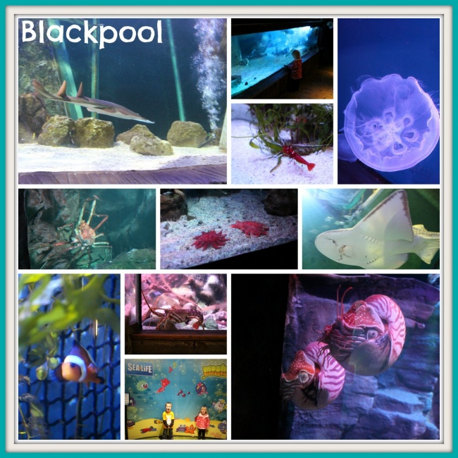 Blackpool Sealife