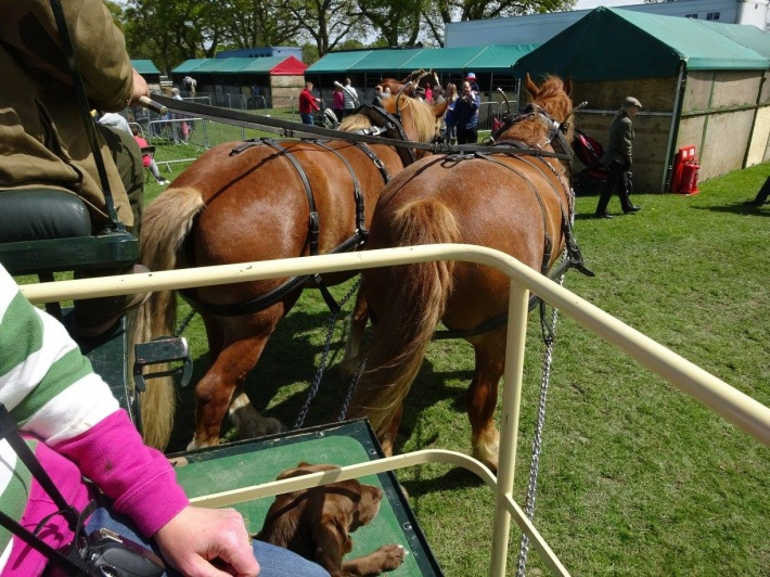 New Forest Spring Fair