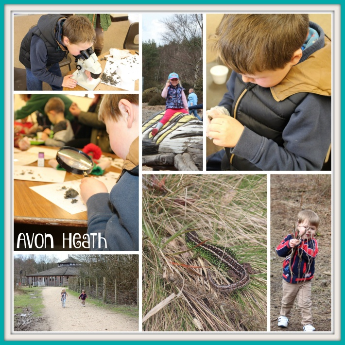 Avon Heath