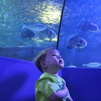 New things to see at SEA LIFE Weymouth