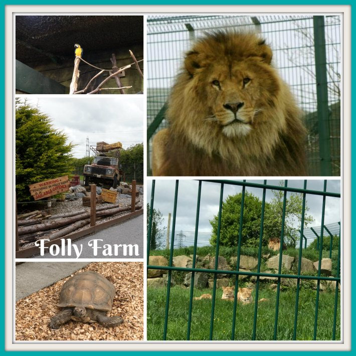 Folly Farm Lion