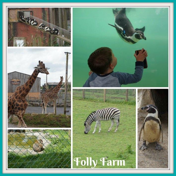 Folly Farm Zoo