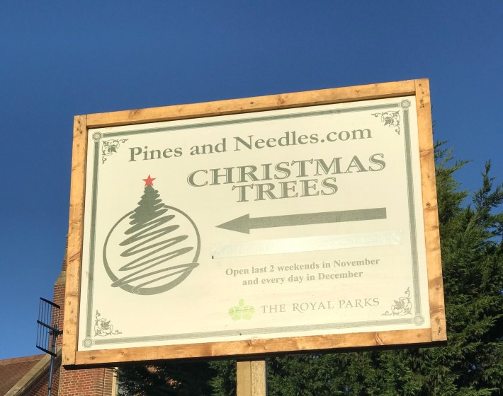 Pines and Needles