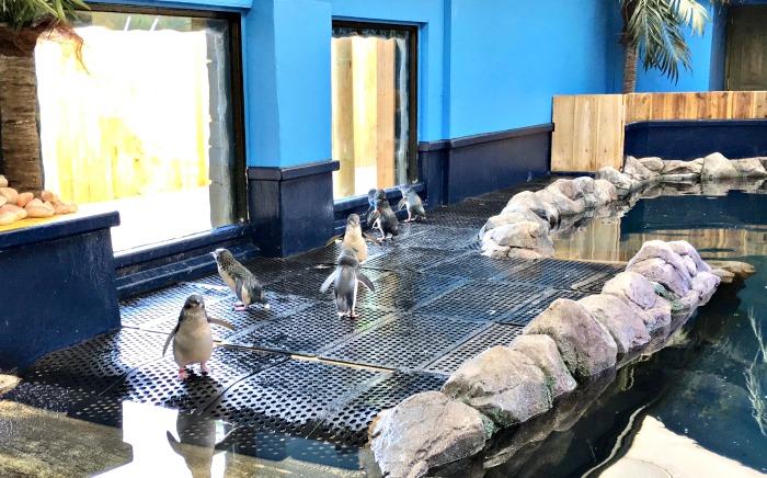 Fairy Penguin Enclosure