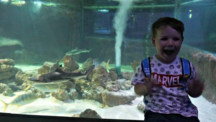 Sebby Shark