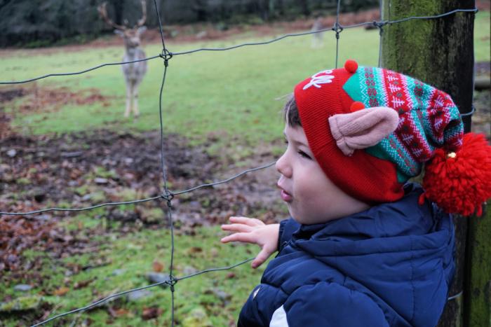 Sebby looking at the deer