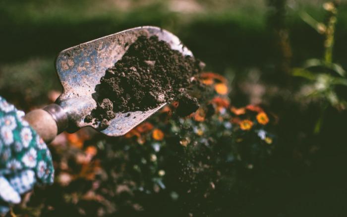 coffee use in garden